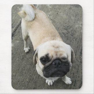 Bauwk ... THAI PUG DOG Mouse Pad