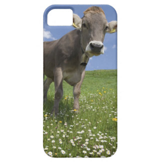 bavarian cow iPhone 5 cover