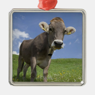 bavarian cow Silver-Colored square decoration
