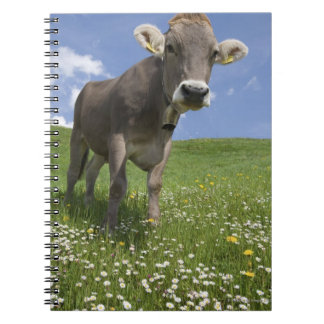 bavarian cow spiral notebook