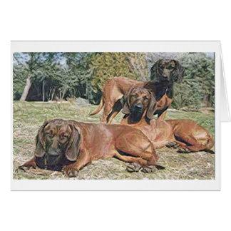 Bavarian Mountain Hound Dog Blank Greeting Card