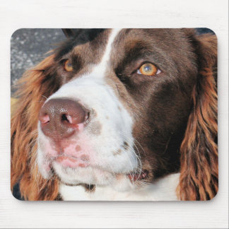 Baxter - English Springer Spaniel Photo-06 Mouse Pad