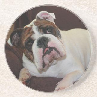 Baxter the Bully Coaster