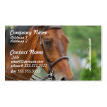 Bay Arab Horse Business Cards