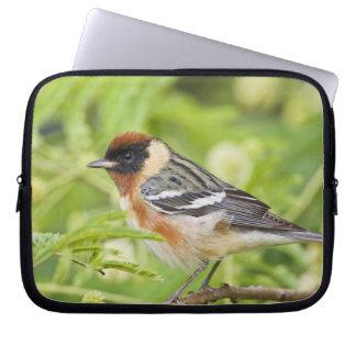 Bay-breasted Warbler (Dendroica castanea) adult Laptop Sleeve