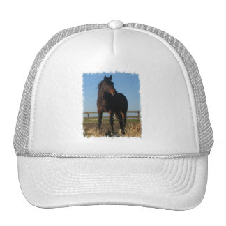 Bay Horse Baseball Hat