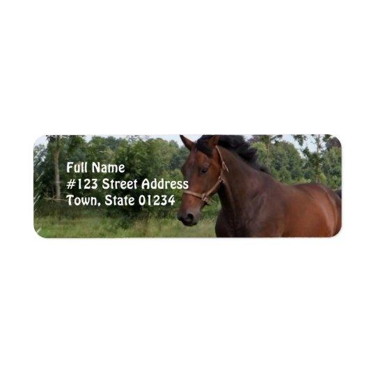 Bay Horse Design Return Address Label