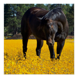 Bay Horse in a Field of Yellow Flowers Poster