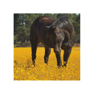 Bay Horse in a Field of Yellow Flowers Wood Print