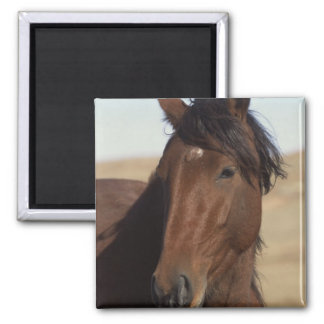Bay Horse in Wind Square Magnet