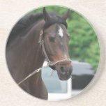 Bay Horse Lunging Coaster