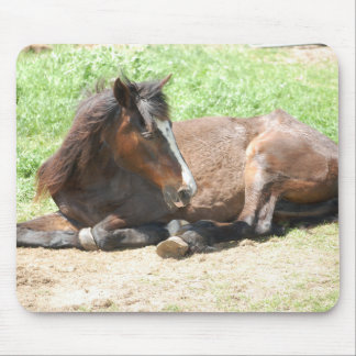 Bay Horse Resting Mouse Pad