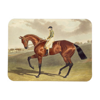 Bay Middleton, winner of the Derby in 1836, after Rectangular Photo Magnet