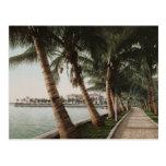 Bay Palm Trees Postcards