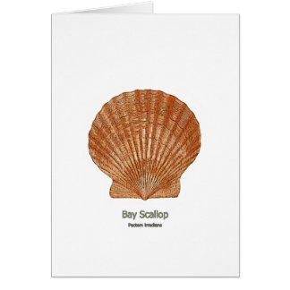 Bay Scallop Shell Card