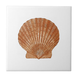 Bay Scallop Shell Tile