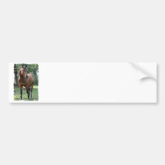 Bay Thoroughbred Horse Bumper Sticker Car Bumper Sticker