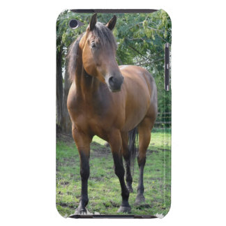 Bay Thoroughbred Horse iTouch Case