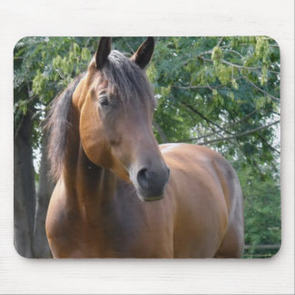 Bay Thoroughbred Horse Mouse Pad