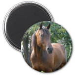 Bay Thoroughbred Horse Round Magnet Refrigerator Magnets