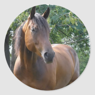Bay Thoroughbred Horse Sticker