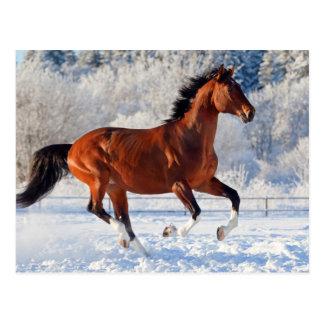 Bay trakehner stallion galloping in winter postcard