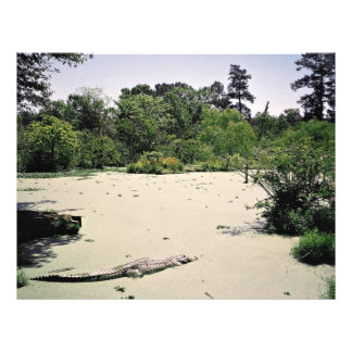 Bayou (swamp), Louisiana, USA Personalized Flyer