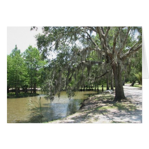 Bayou Tree, Avery Island, Louisiana Greeting Cards
