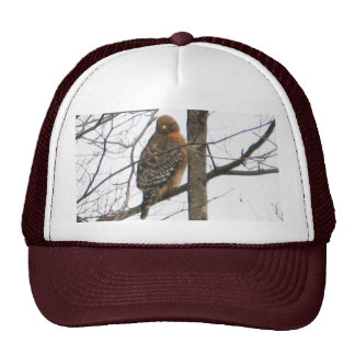 BC- Red-shouldered Hawk Hat