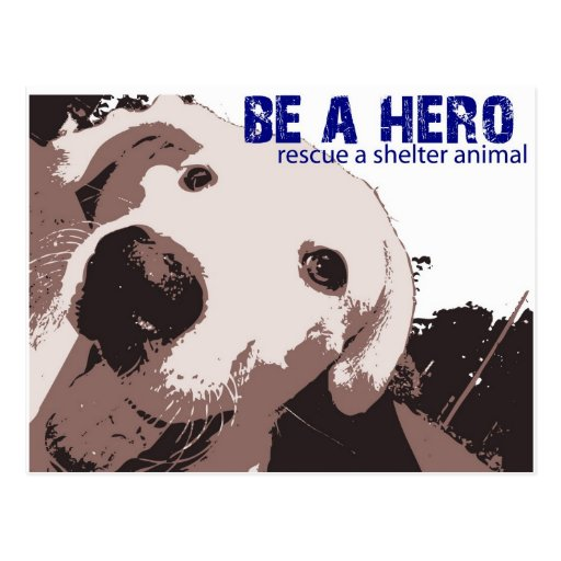 Be A Hero Rescue A Shelter Animal Postcard