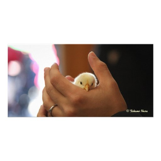 Be gentle (baby chick) (making kind, don't you thi picture card