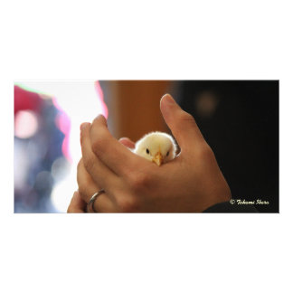Be gentle (baby chick) (making kind, don't you thi photo cards