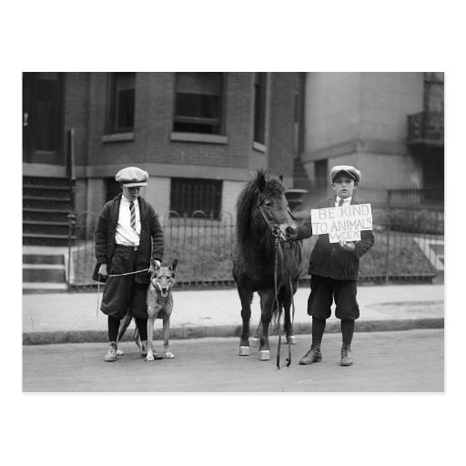 Be Kind to Animals Week, 1923 Postcards