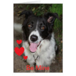 Be Mine Valentine from the Border Collie Dog
