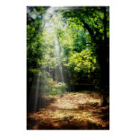 Be Still (Forest Landscape Poster) Poster