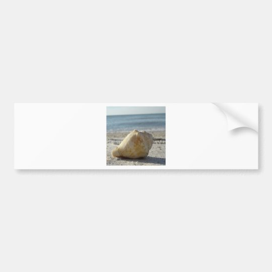 Beach A Clear Water Shell Bumper Sticker