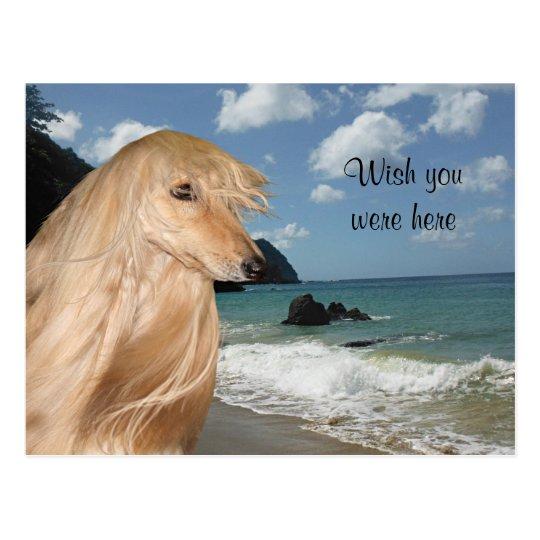 Beach afghan hound postcard