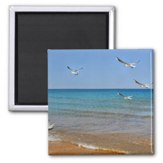 Beach and Seagulls Magnet