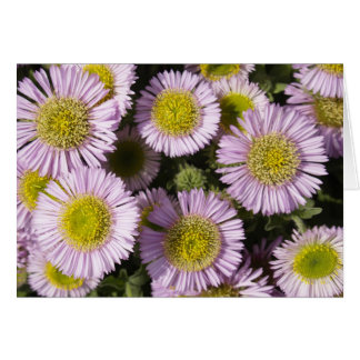 Beach Asters Card