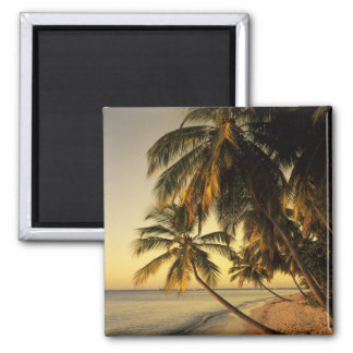 Beach at sunset, Trinidad Magnet