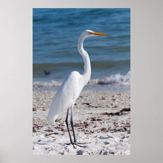 Beach-bum Heron Poster