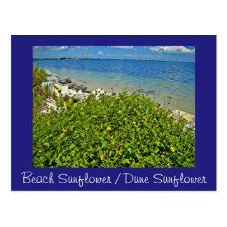 Beach  / Dune Sunflower postcard or invitation