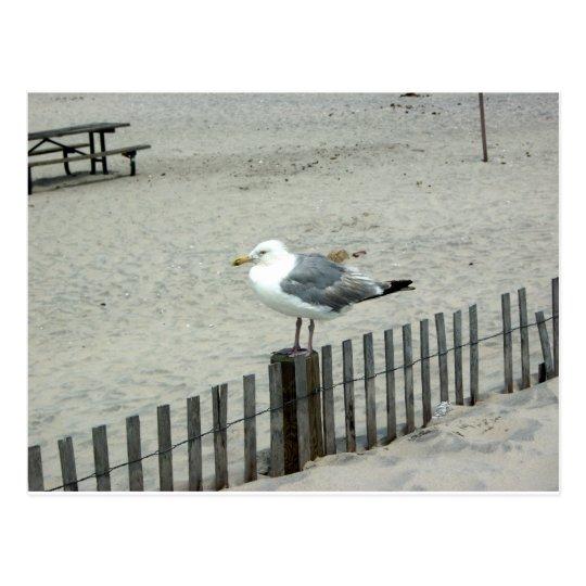 Beach Gull Postcard