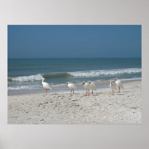 Beach Ibis Poster