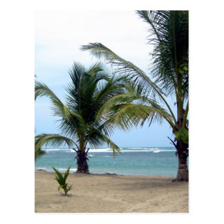 Beach in Dominican Republic Postcard