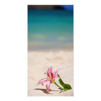 Beach Lily Photo Cards
