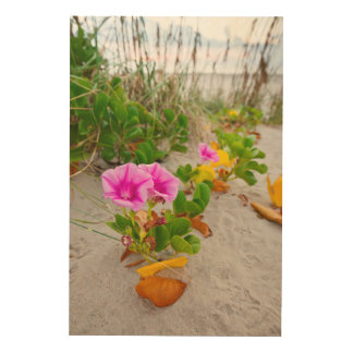 Beach Morning Glory (Ipomoea Stolonifera) Wood Print