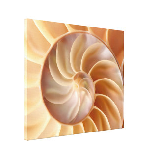 Beach Nautilus Shell Art Canvas Print