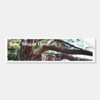 Beach Pine Bumper Sticker