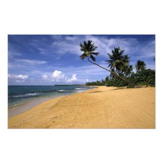 Beach Puerto Rico 2 Photographic Print